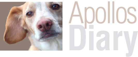 ApollosDiary_Logo