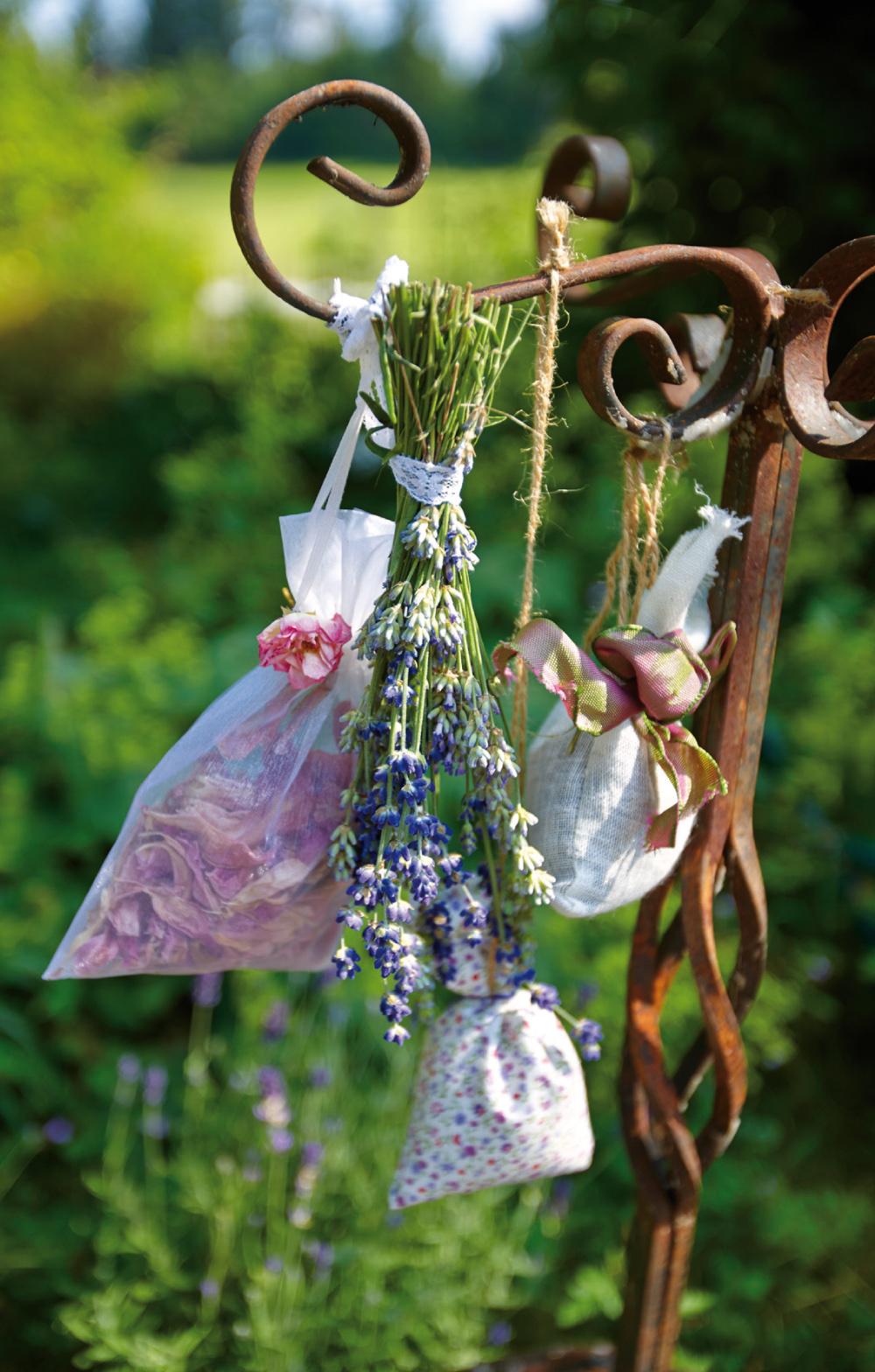 Rosen-Lavendel_4