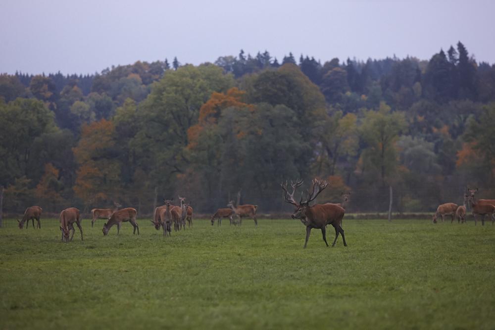 2015_10-KH-Herbst-Hirsche 51