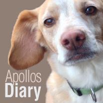 Apollos Diary_LOGO-2