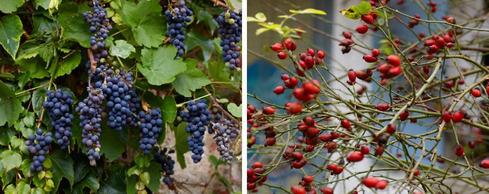 Herbst_1-1-NEU