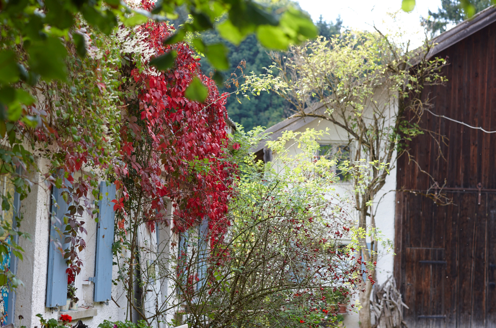 Herbst_1-NEU
