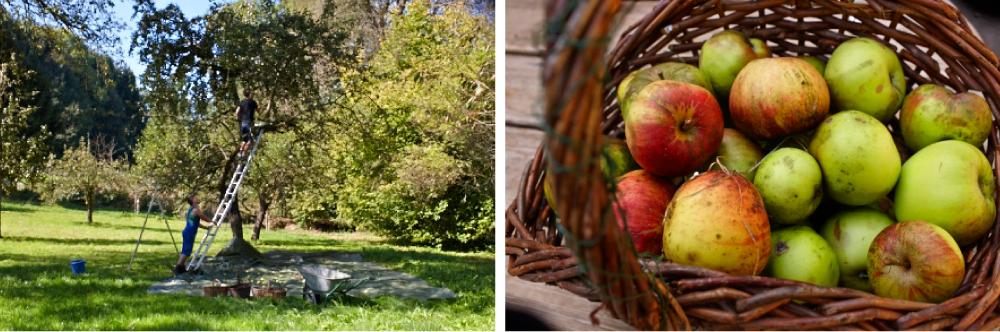 Herbst_3-2-NEU
