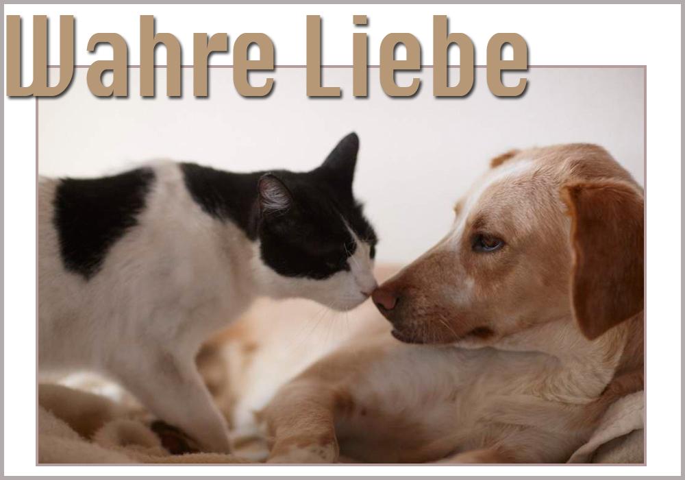 Wahre Liebe-1