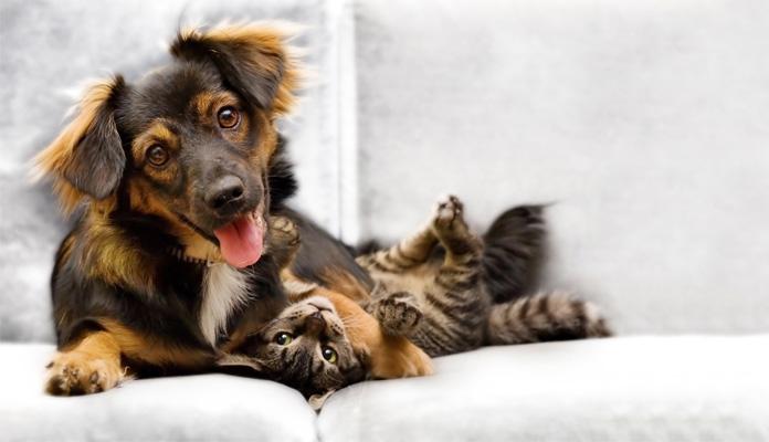 hund-und-katze-vergesellschaften