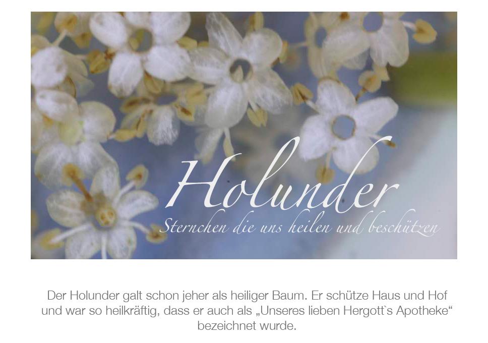 Holunder5